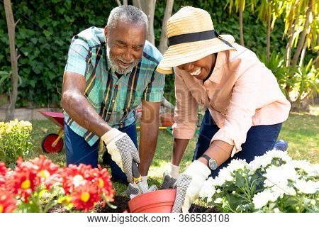 Senior African American couple spending time in their garden on a sunny day, planting flowers. Social distancing and self isolation in quarantine lockdown.