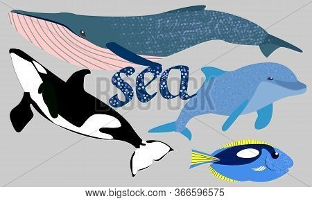 The Sperm Whale, Killer Whale, Dolphin And Fish Are The Inhabitants Of The Ocean.