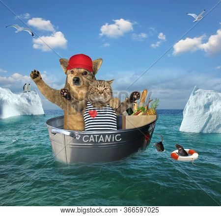 The Two Brave Sailors A Cat With A Dog After The Shipwreck  Are Drifting In The Steel Wash Tub Among