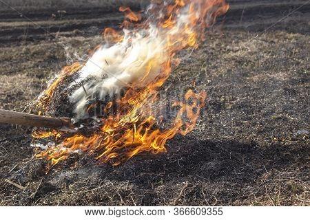 A Man Burns Dried Grass On A Fire. Dry Grass Burns On An Iron Pitchfork. Burning Dry Grass In The Sp