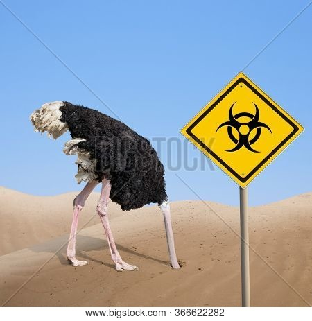 scared ostrich with head in sand near warning quarantine bio hazard signboard.