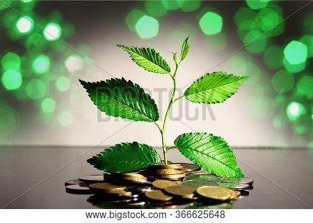 A Green Sprout From A Pile Of Kopecks. Savings. Symbol Of Revenue Growth. Ukrainian Currency.