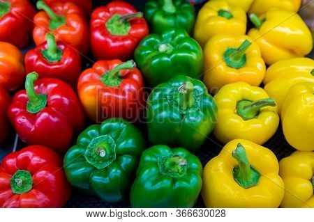 Red And Yellow And Green Sweet Peppers. Pile Three Sweet Peppers On A Wooden Background, Cooking Veg