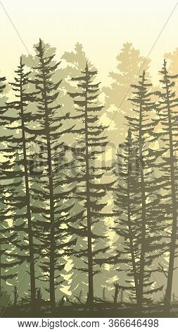 Vertical Sunny Illustration View From Thicket Coniferous Forest With Trunks Of Fir Trees And Treetop