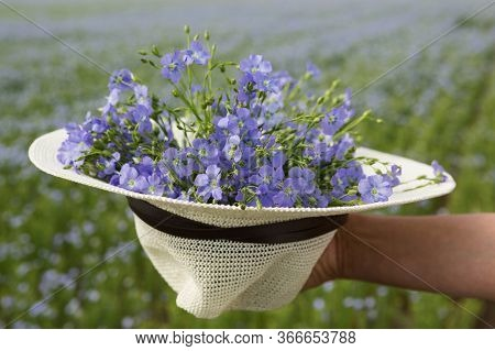 Bouquet Of Blue Flax Flowers In A Straw Hat, Against The Background Of A Field With Blooming Flax, C