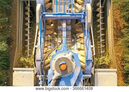 Olive Harvester Processing Rows Of Olive Trees, Aerial Image.