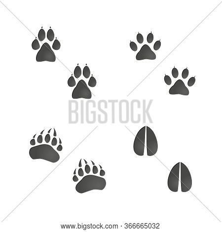 Animals Footprint Set: Cat, Dog, Bear Paw, Deer Hoof. Isolated Illustration Graphic Vector Footprint