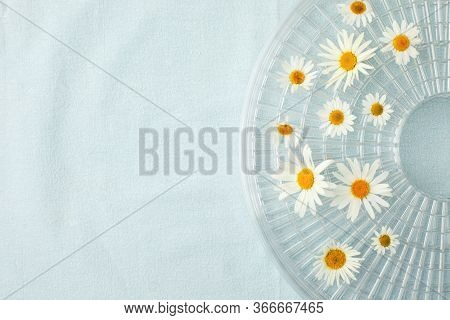 Camomile Blossoms, Dried Camomile Flowers. Doctor Treatment And Prevention Of Immune Concept, Medici