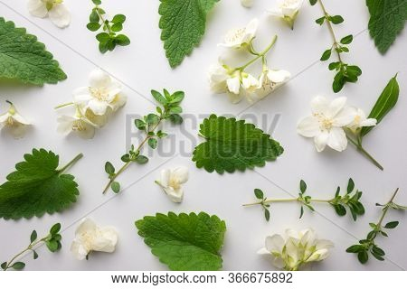 Creative floral layout from green melissa leaves, thyme twigs and jasmine flowers. Top view. Flat lay. Floral herbal background