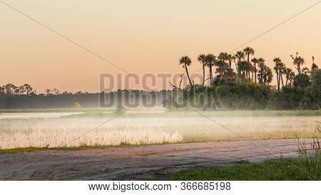 Florida Marsh And Swamp At Sunrise With Fog, Orlando Wetlands.