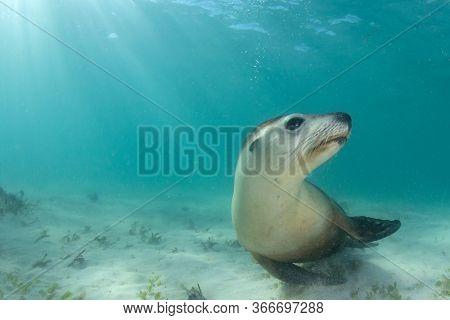 Sea Lion underwater portrait photo