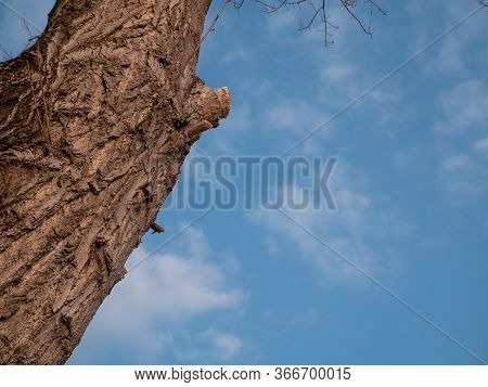 Part Of Wood, Bark Against Blue Sky With Clouds