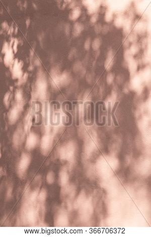 Shadow Of Leaves On A Pink Wall. Abstract Background.