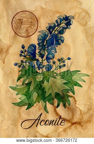 Aconite Flower With Magic Seal On Old Paper Texture Background. Witch Healing Herbs Collection For H