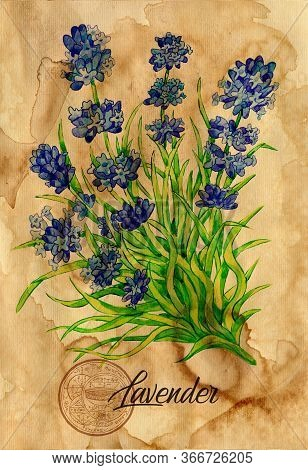 Lavender Flower With Magic Seal On Old Paper Texture Background. Witch Healing Herbs Collection For