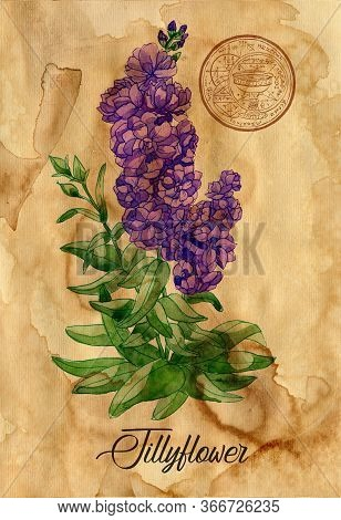 Jillyflower With Magic Seal On Old Paper Texture Background. Witch Healing Herbs Collection For Hall