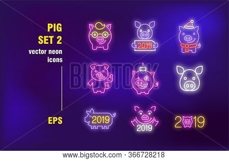 Pig Neon Signs Collection. Illuminated Boar, Hog And Pork. Vector Illustrations For Bright Billboard