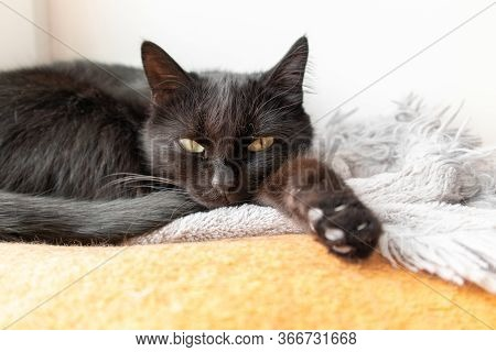 Black Cat Lying On The Orange Blanket. Black Cat With Yellow Eyes Sleeping