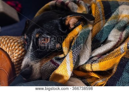 A Dog Posing With A Colorful Scarf