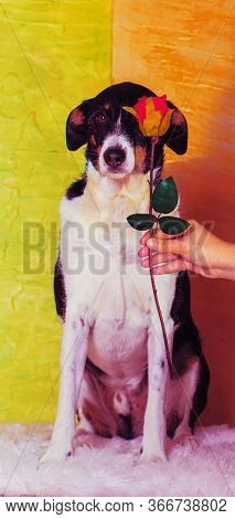 Beautiful Dog Brown Posing With Flowers In Eye Background Of Light Colors