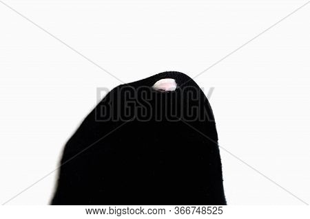 Leaky Black Sock On An Isolated Background