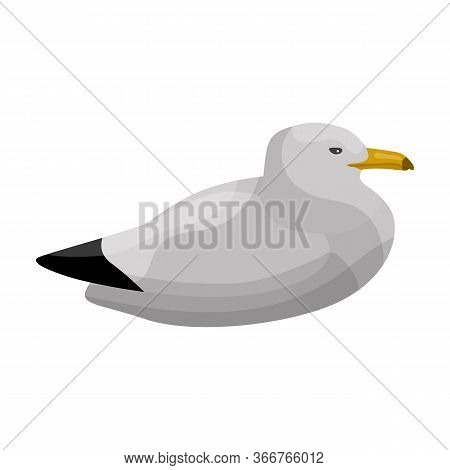 Bird Gull Vector Icon.cartoon Vector Icon Isolated On White Background Bird Gull.