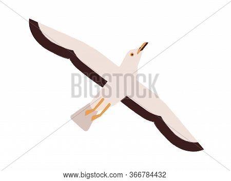 Cartoon Seagull Take Off Straighten Wings Vector Flat Illustration. Colorful Marine Bird Flying Enjo