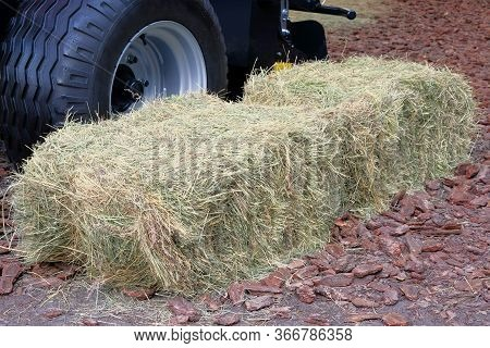 Hay And Straw Next To The Truck. Hay For Cows, Horses, Goats And Sheep. Аgricultural, Harvest And Fa