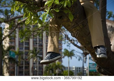 Close-up Of The Legs And Feet Of A Little Boy In Sneakers And Pants. A Child Sits On A Branch Of A H