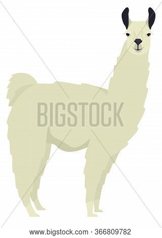 White Llama Lama Glama Flat Vector Illustration Isolated Object Set