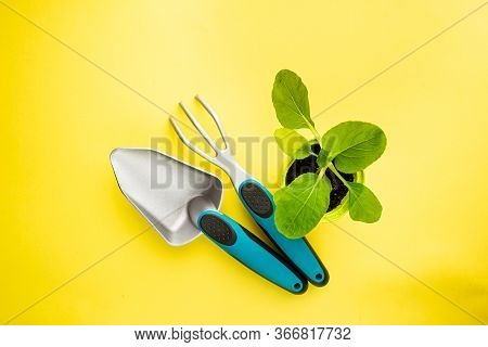 Gardening Tools, Seedlings And Fertile Soil On Yellow Background Seen From Above, Top View. Gardenin