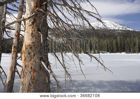 Frozen Lake in Yellowstone