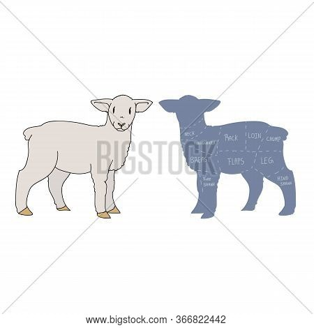 Cute French Farmhouse Lamb With Butcher Chart Vector Clipart. Hand Drawn Shabby Chic Style Country F