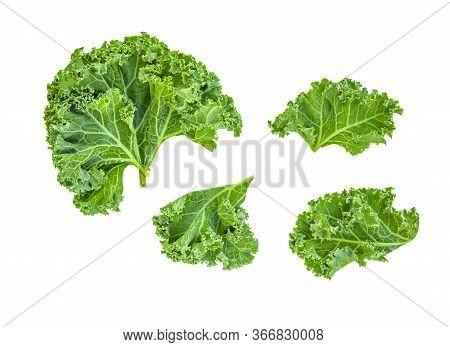 Creative Layout Made Of Kale Leaves. Flat Lay. Raw Kale Salad Isolated On White Background. Food Con