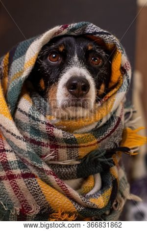 Dog Posing With A Colorful Scarf