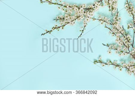 Little White Flowers On Blue Background. Top View. Time For Love And Greetings. Spring Time Change,