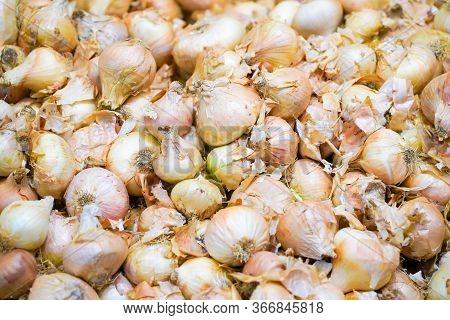 Fresh Onion. Onion Background. Ripe Onions. Onions In The Market
