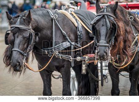Tourist Horse Chariot On Pariser Platz In Berlin, Capital Of Germany