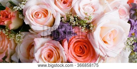 Romantic Background, Delicate Cream Pink Roses Flowers Close-up.