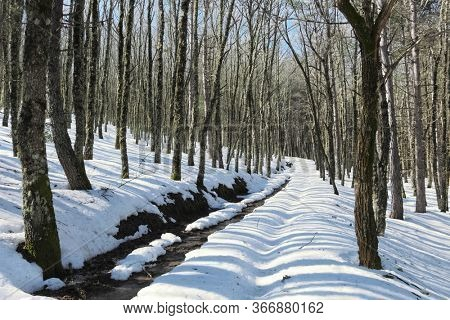 path snow covered crosses winter forest in Nebrodi Mountains natural landmark of Sicily