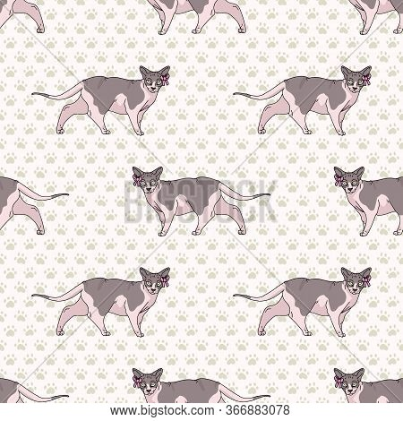 Cute Cartoon Sphynx Cat With Pink Bow Seamless Vector Pattern. Pedigree Exotic Kitty Breed Domestic