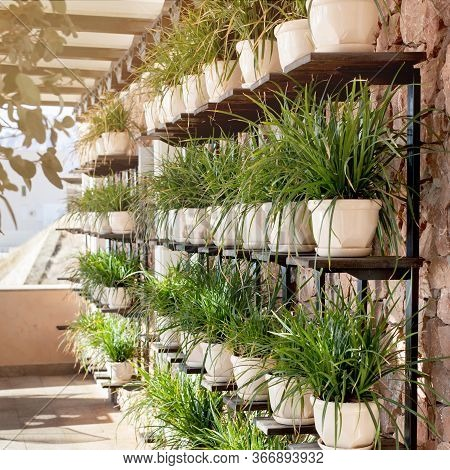 Eco Facade. The Wall In The Cafe Is Decorated With Many Green Plants In Pots. Abstract Background.