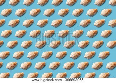 Seashell Pattern On A Blue Background. Summer Minimalist. Flat Lay.
