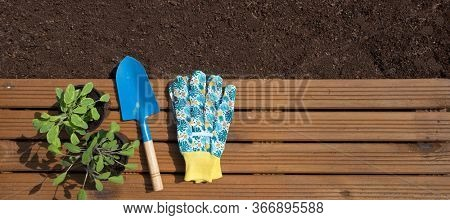Gardening background, fresh soil, organic sage plants and tools on wooden patch