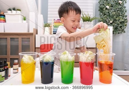 Asian Kindergarten Boy Having Fun Making Rainbow Cabbage Experiment, Kid Learn About How Plants Thri