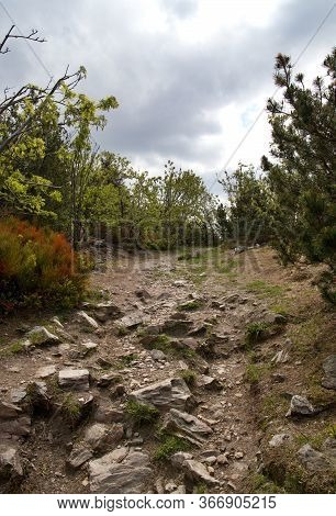Stony Path Lined With Trees, The Top Of Ještěd, Wild Clouds