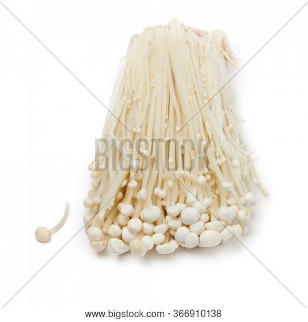 Cluster of fresh cultivated white enokii mushrooms close up isolated on white background