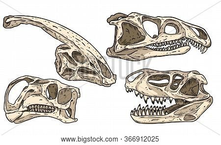 Dinosaurs Hand Drawn Skulls Colorful Doodles Set. Carnivorous And Herbivorous Fossils Collection Of