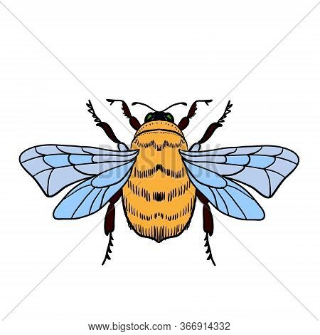 Vector Illustration Of A Honey Bee On A White Background. Bumblebee, Beehive.