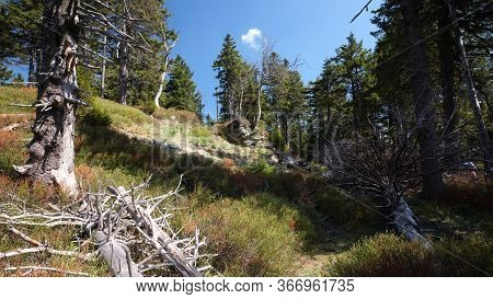 Mountain Ridge Forrest In Nature Reservation, Jeseniky, Czech Republic. E3 Walking Path Section Cerv